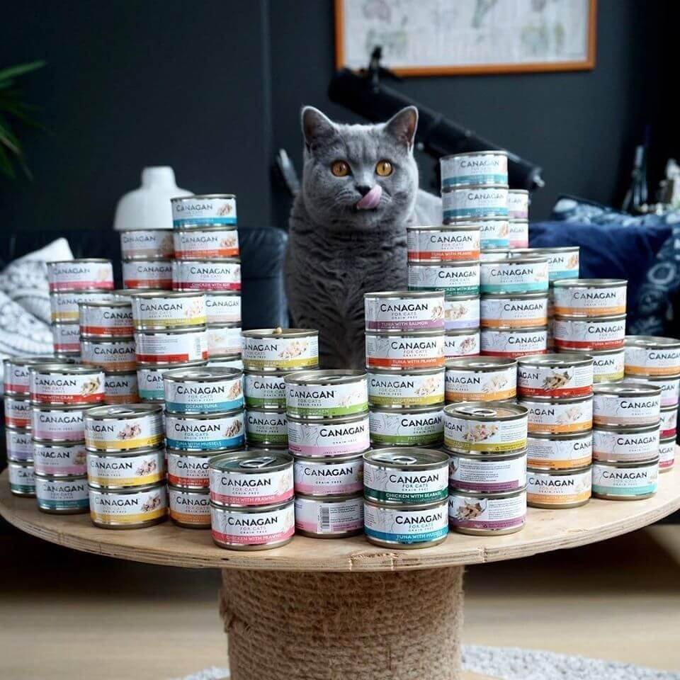 Cat surrounded by cans