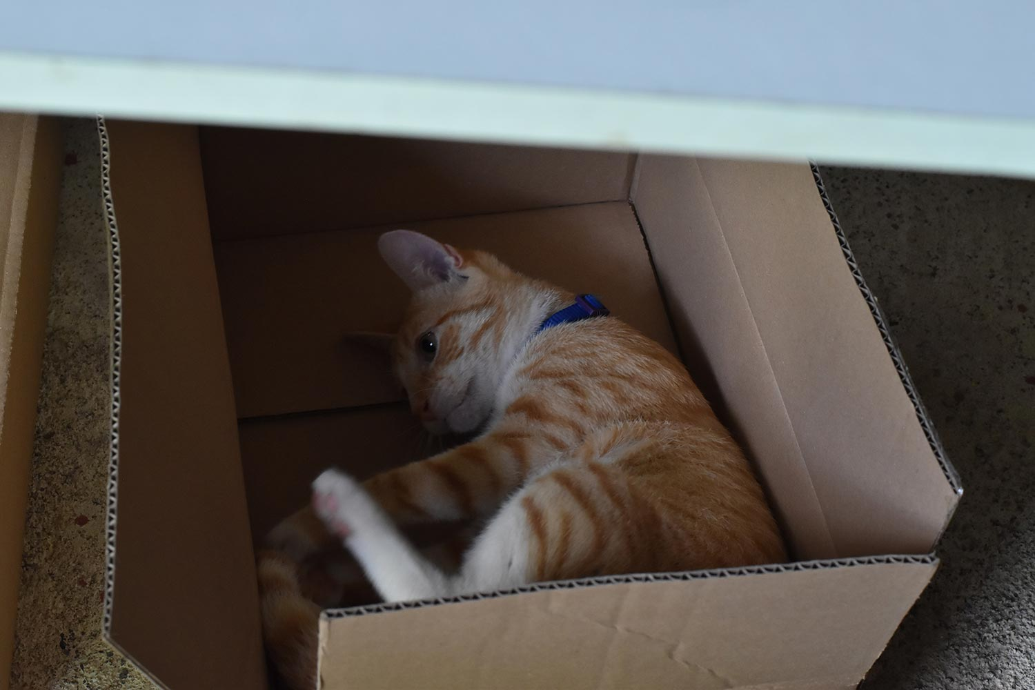 Canagan In a Box Cat Sleeping Position