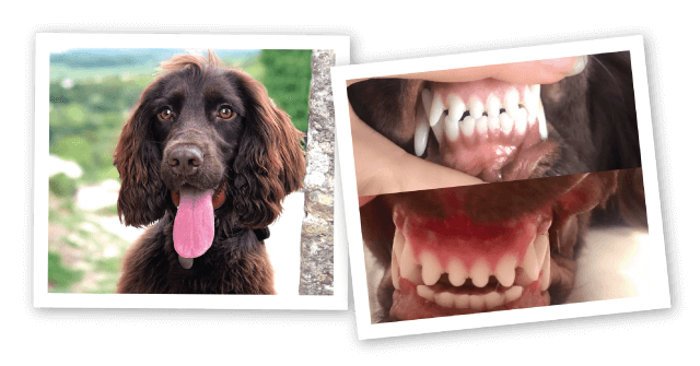 Dog before and after dental pictures